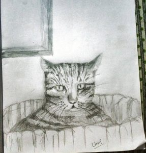 cat pencil sketch, cat hiding under clothes,
